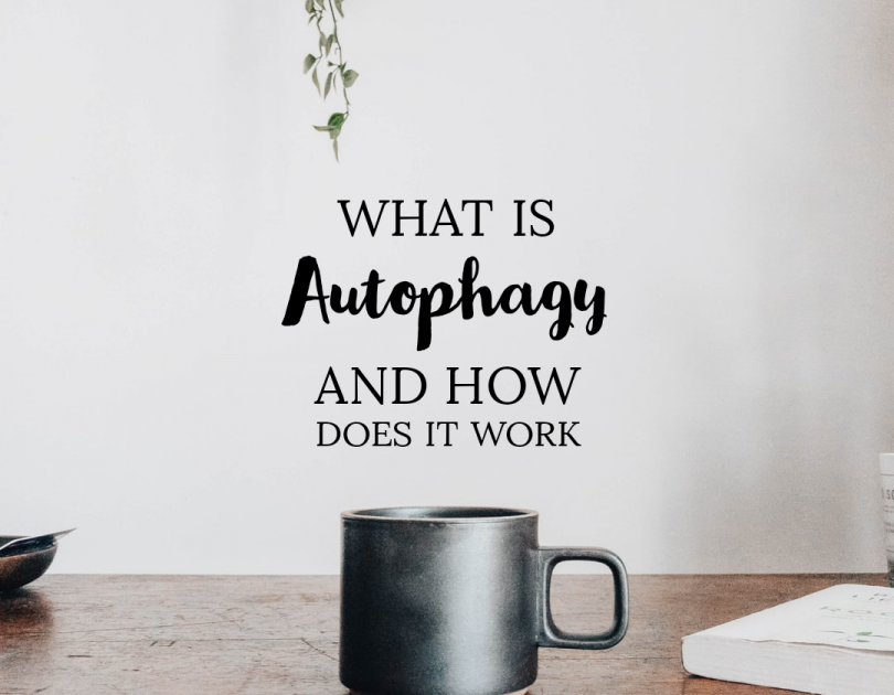 What is Autophagy and How Does It Work?